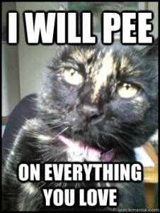 cat threatens to pee on everything