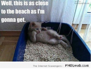 Cat laying in litter box dreaming about the beach.