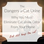 Man in gas mask to avoid cat urine odor.