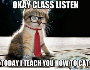 teacher-cat