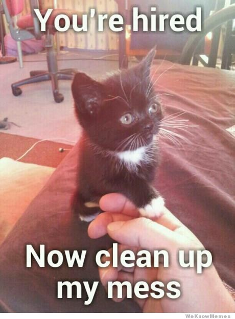 Vinegar to clean cat piss up