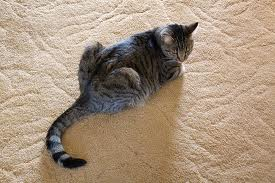 how to clean dry cat pee out of a mattress