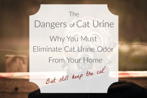 The Dangers Of Cat Urine: Why You Must Eliminate Cat Urine Odor From