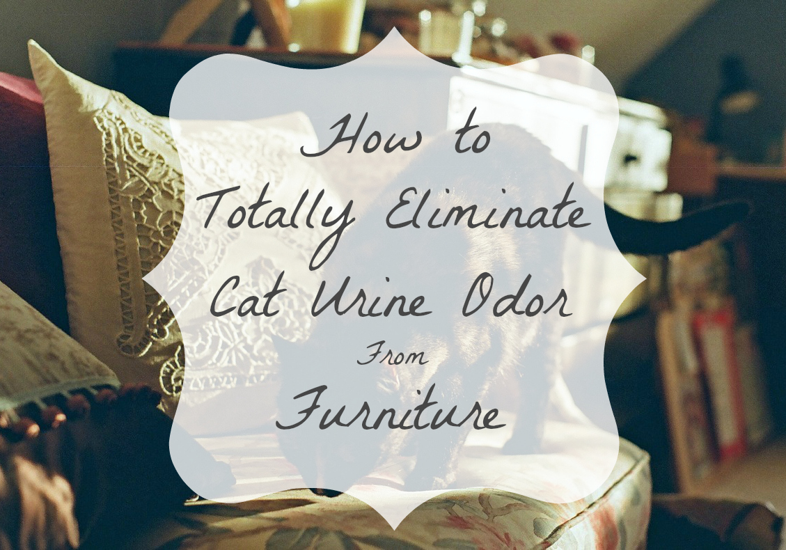 Beautiful How To Get Rid Of Cat Smell On Furniture Urine Problems
