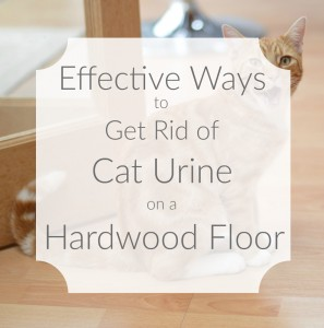 Effective Ways To Get Rid Of Cat Urine On A Hardwood Floor Problems Eliminated
